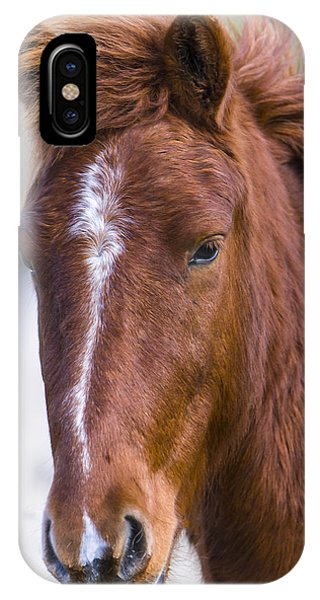 A Chestnut Horse Portrait IPhone Case
