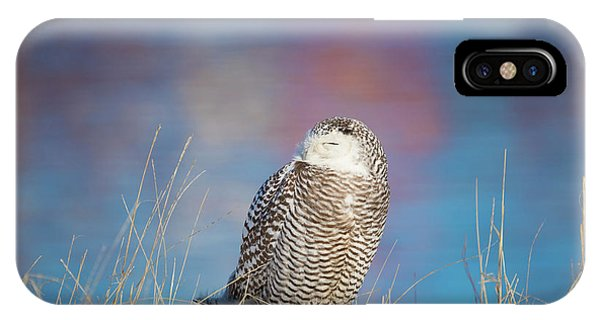 A Colorful Snowy Owl IPhone Case