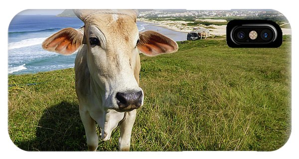 A Cow At The Beach IPhone Case