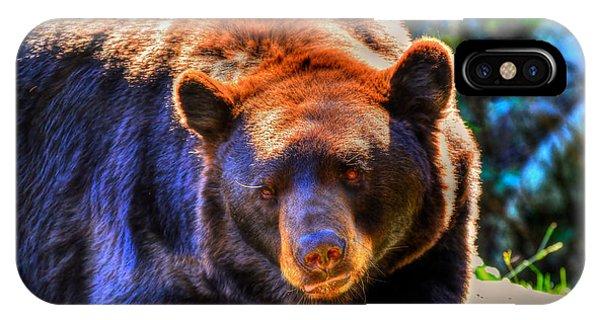 A Curious Black Bear IPhone Case