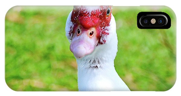 A Curious Muscovy Duck  IPhone Case