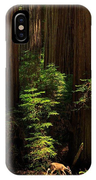 A Deer In The Redwoods IPhone Case