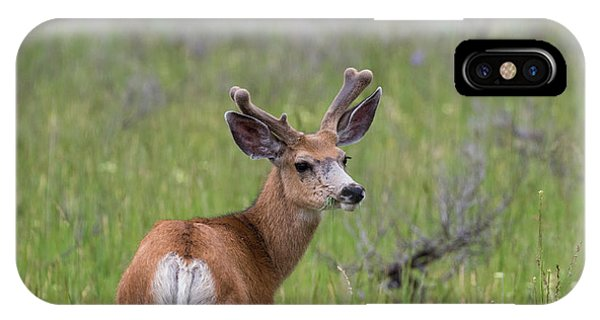 A Deer In Yellowstone National Park  IPhone Case