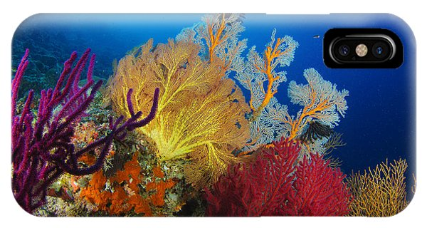 A Diver Looks On At A Colorful Reef IPhone Case