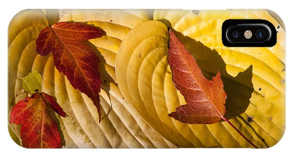 A Fall Contrast IPhone Case