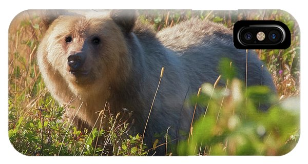 A  Female Grizzly Bear Looking Alertly At The Camera. IPhone Case