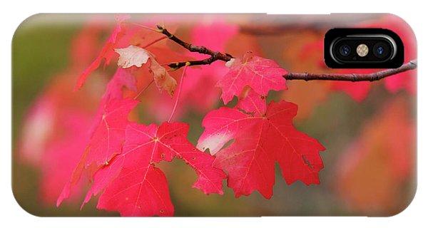 A Flash Of Autumn IPhone Case