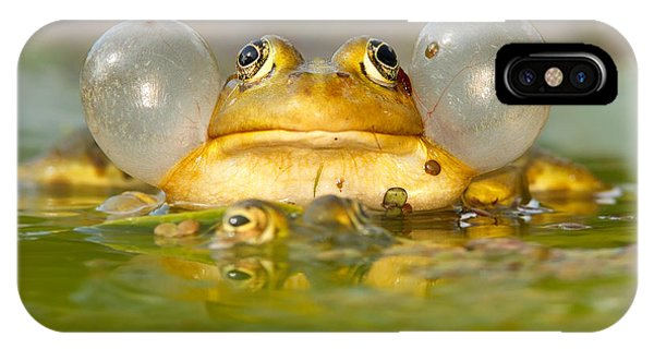 Amphibians iPhone Case - A Frog's Life by Roeselien Raimond