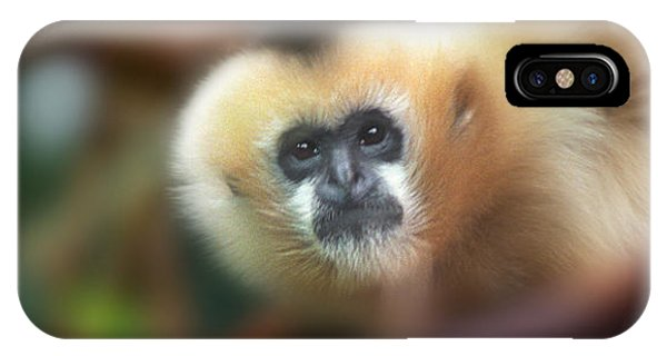 A Gibbon's Stare IPhone Case