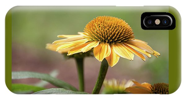 A Golden Echinacea -  IPhone Case
