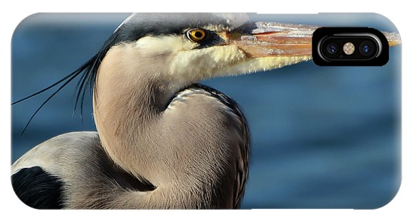 A Great Blue Heron Posing IPhone Case