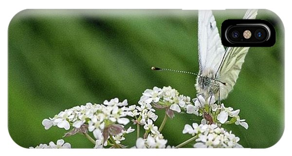 Scenic iPhone Case - A Green-veined White (pieris Napi) by John Edwards