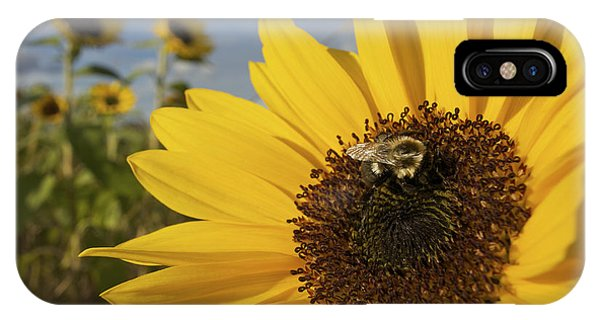 A Honey Bee Visiting A Sunflower IPhone Case