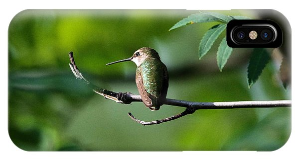 Little Things iPhone Case - A Hummingbird Rests by Jeff Swan