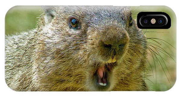 Groundhog iPhone Case - A Hungry Fellow  by Paul W Faust - Impressions of Light