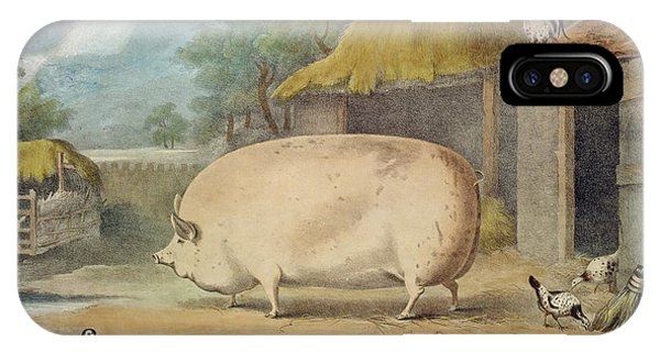 Barnyard iPhone Case - A Leicester Sow by William Henry Davis