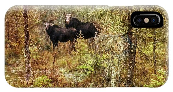 A Mother And Calf Moose. IPhone Case