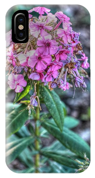A Phlox On All Your Houses Phone Case by David Bearden