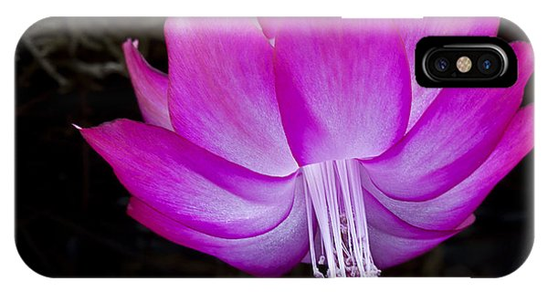 IPhone Case featuring the photograph A Pink Christmas Cactus by Ken Barrett