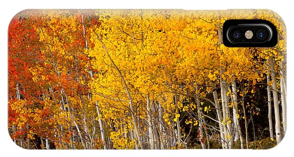A Place In The Aspen Forest IPhone Case