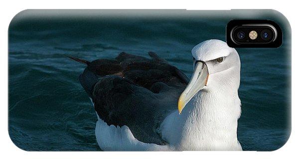 A Portrait Of An Albatross IPhone Case
