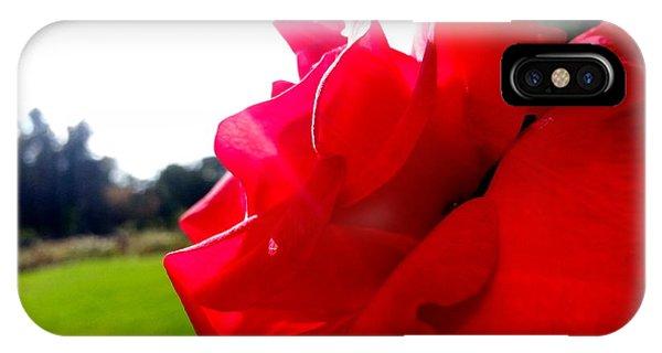 A Rose In The Sun IPhone Case