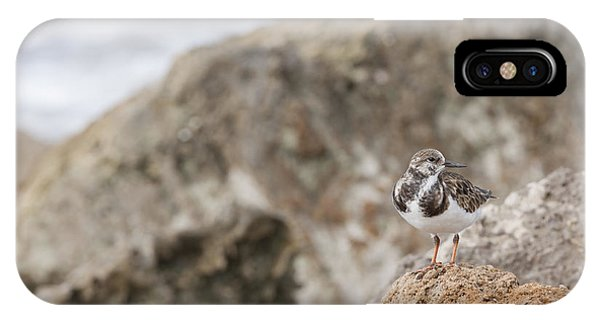 A Ruddy Turnstone Perched On The Rocks IPhone Case