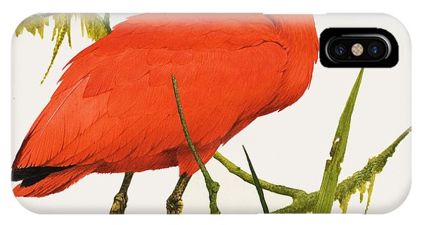 Scarlet iPhone Case - A Scarlet Ibis From South America by Kenneth Lilly