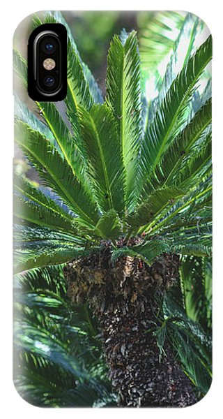 A Shady Palm Tree IPhone Case