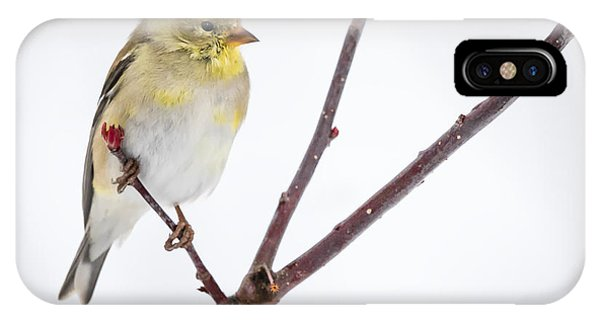 A Sign Of Spring IPhone Case