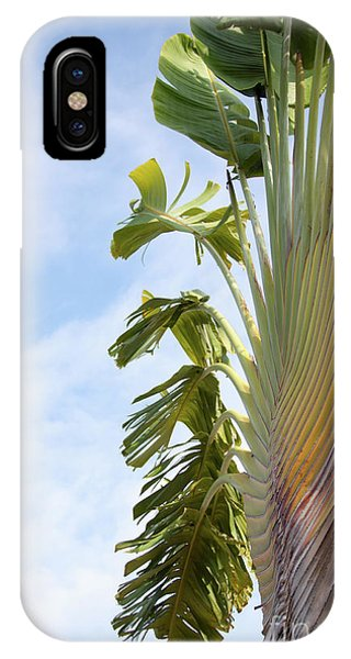 A Slice Of Nature IPhone Case