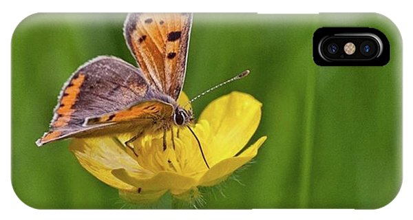 Animals iPhone Case - A Small Copper Butterfly (lycaena by John Edwards