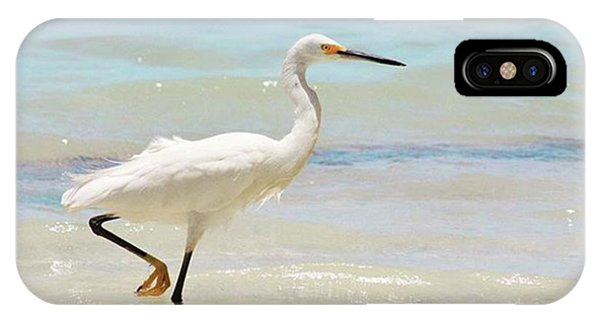 iPhone Case - A Snowy Egret (egretta Thula) At Mahoe by John Edwards