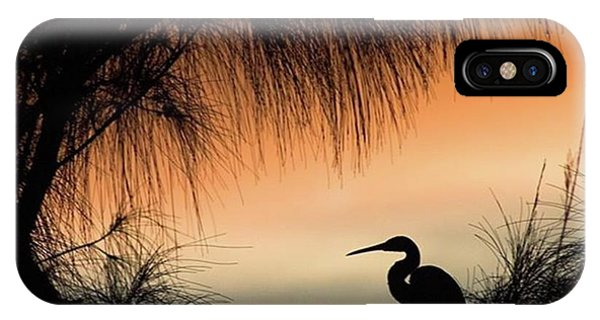 Scenic iPhone Case - A Snowy Egret (egretta Thula) Settling by John Edwards
