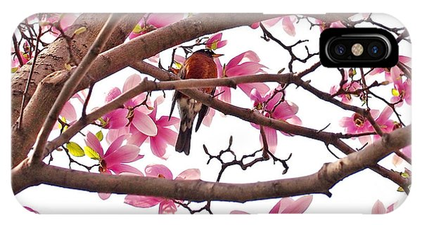 Blossom iPhone Case - A Songbird In The Magnolia Tree by Rona Black