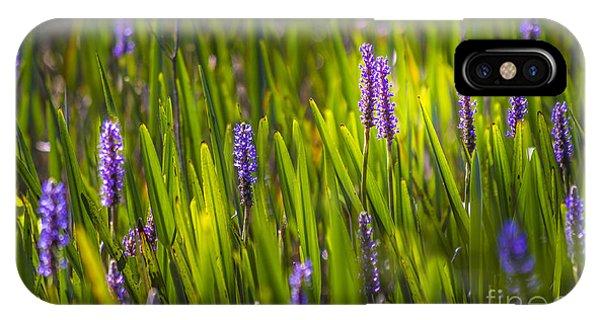 Aquatic Plants iPhone Case - A Splash Of Sunshine by Marvin Spates