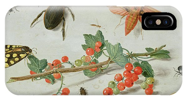 Magpies iPhone Case - A Sprig Of Redcurrants With An Elephant Hawk Moth, A Magpie Moth And Other Insects, 1657 by Jan Van Kessel