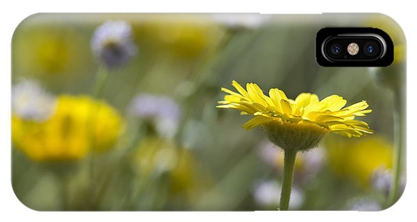 A Spring Daisy IPhone Case
