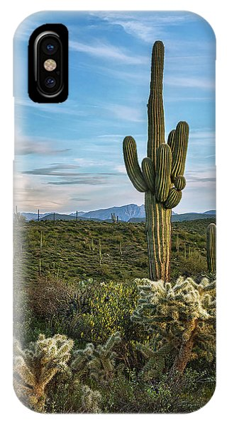 Teddy Bear Cholla iPhone Case - A Spring Evening In The Sonoran  by Saija Lehtonen