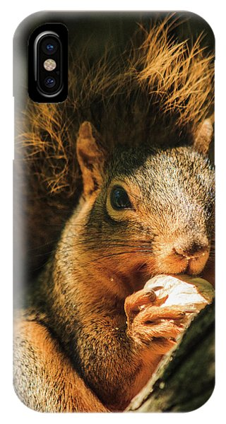 A Squirrel And His Nut IPhone Case