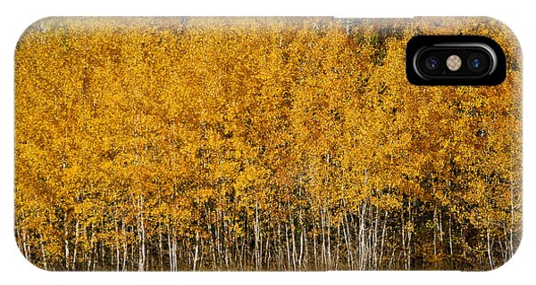 A Stand Of Aspen IPhone Case