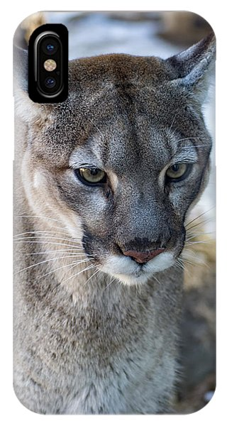 A Stunning Mountain Lion IPhone Case