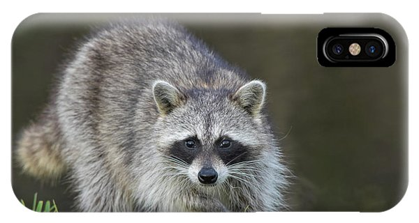 A Surprised Raccoon IPhone Case