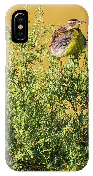 IPhone Case featuring the photograph A Tad Ruffled by John De Bord