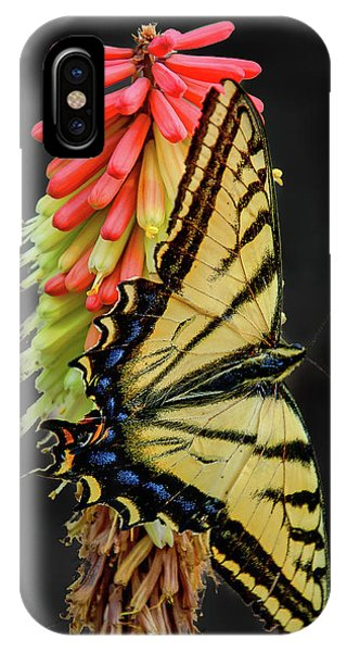IPhone Case featuring the photograph A Tiger On A Poker by Britt Runyon