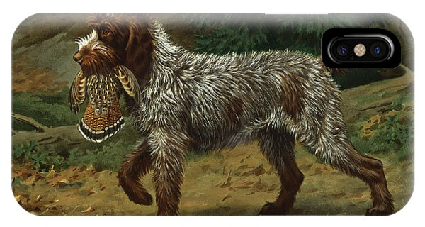 Griffon iPhone Case - A Wire-haired Pointing Griffon Holds by Walter A. Weber