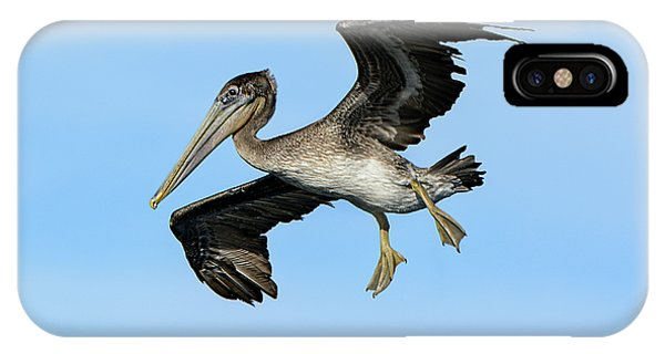 A Young Brown Pelican Flying IPhone Case