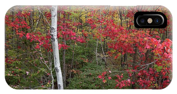 IPhone Case featuring the photograph Acadia Fall Colors by Paul Schultz