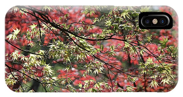 Acer Leaves In Spring IPhone Case