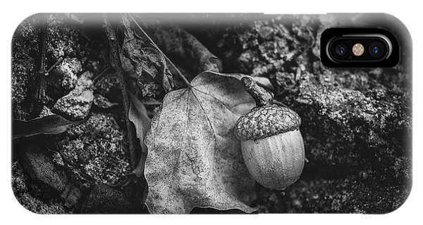 Seeds iPhone Case - Acorn by Tom Mc Nemar